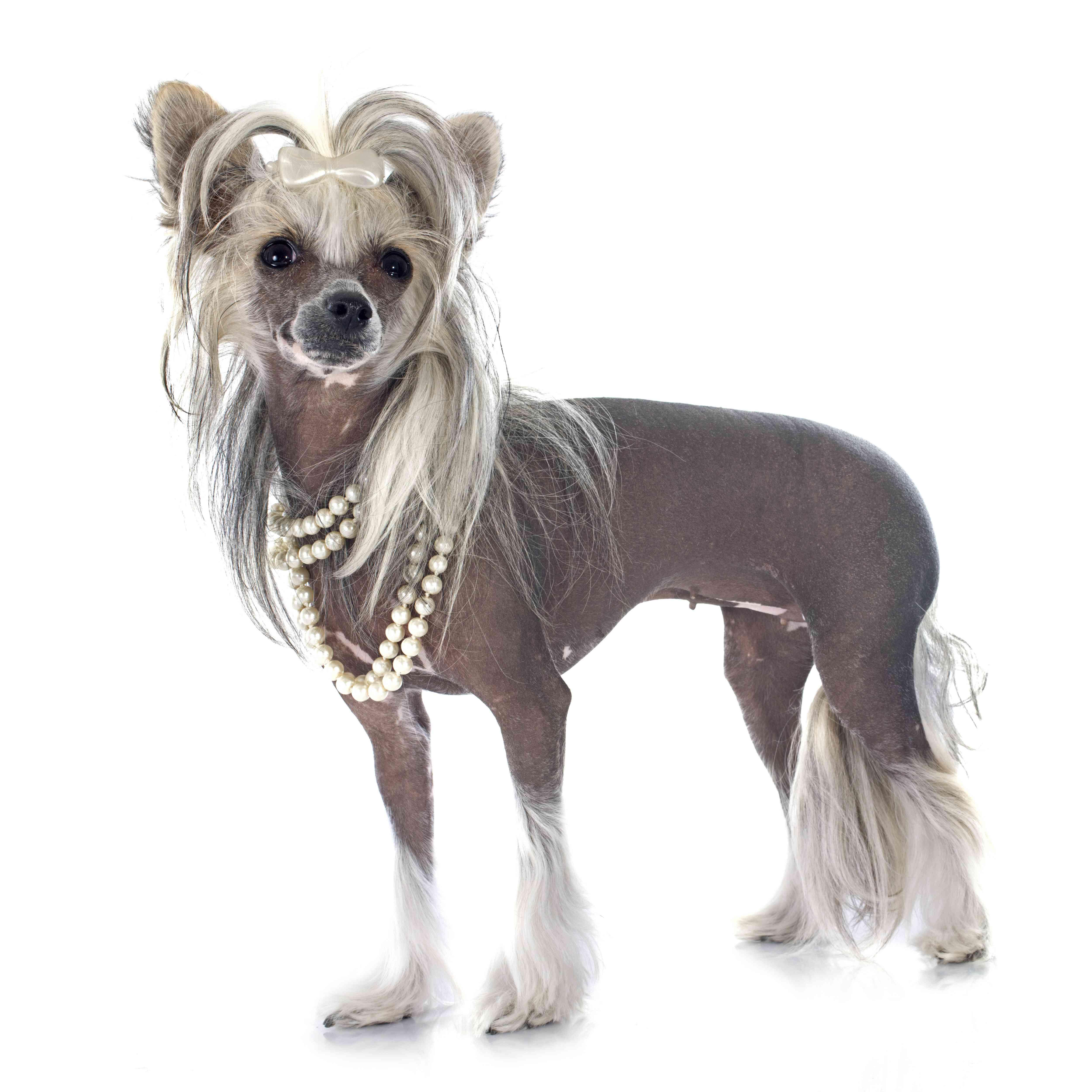 bijoux pour les animaux